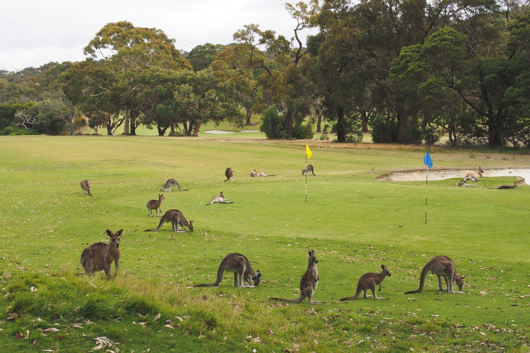 Melbourne hotspots